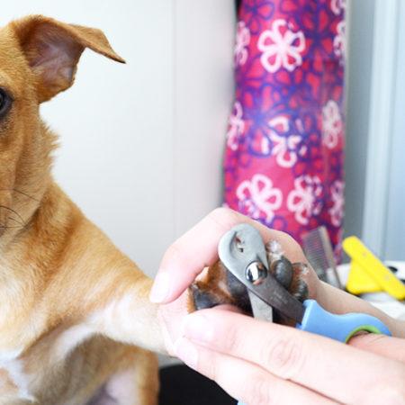 Comment enlever les poils de chien emmêlés à la maison